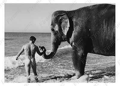 nude king on elephant